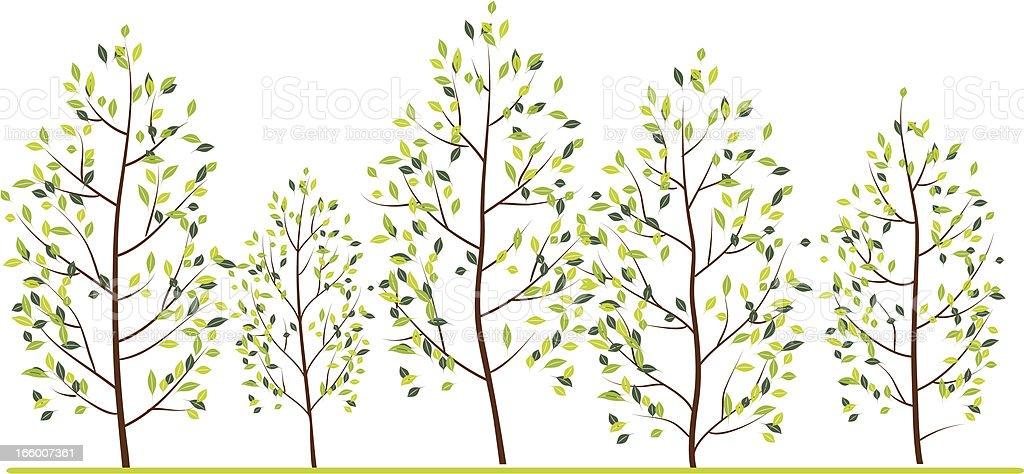 Spring trees royalty-free stock vector art