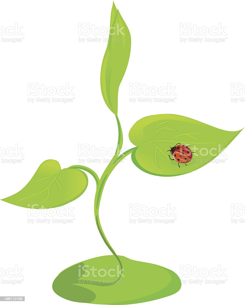 sprout plants with ladybird isolated royalty-free stock vector art