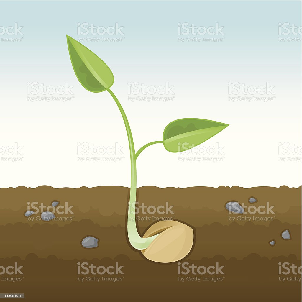 Sprouting Seedling Cross-Section royalty-free stock vector art