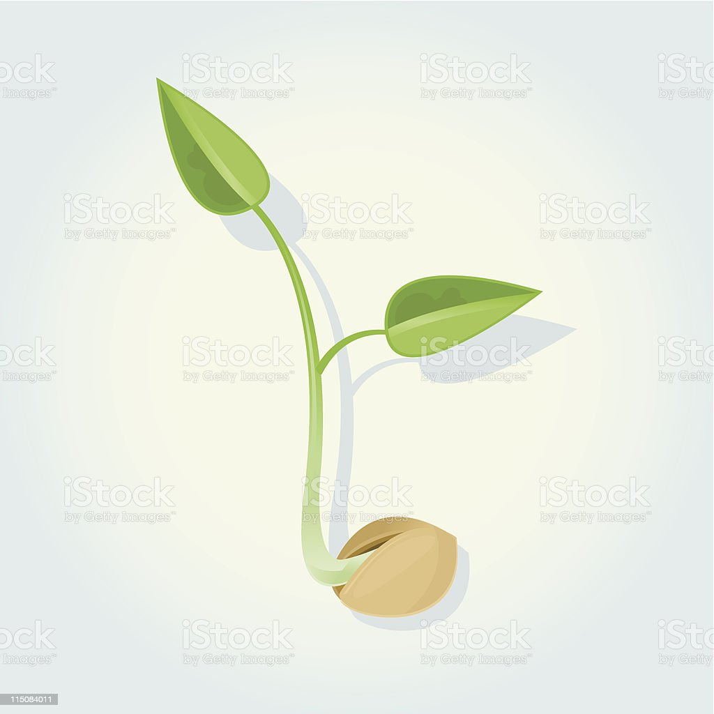 Sprouting Seedling vector art illustration