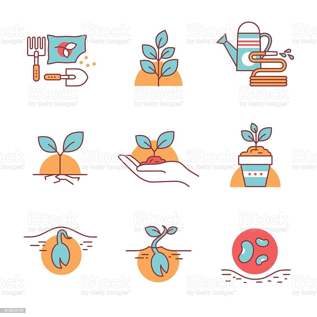 Sprouting seeds and home gardening vector art illustration