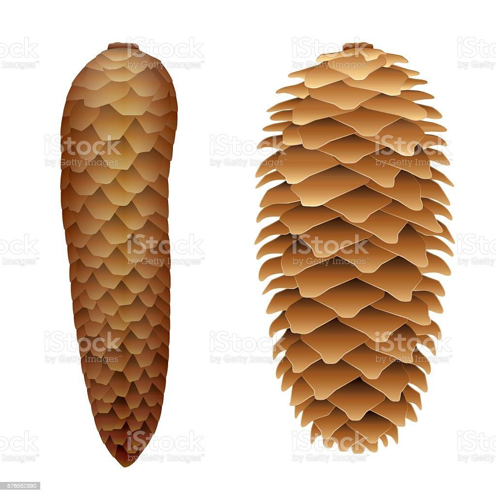 Spruce Cone Open Closed vector art illustration