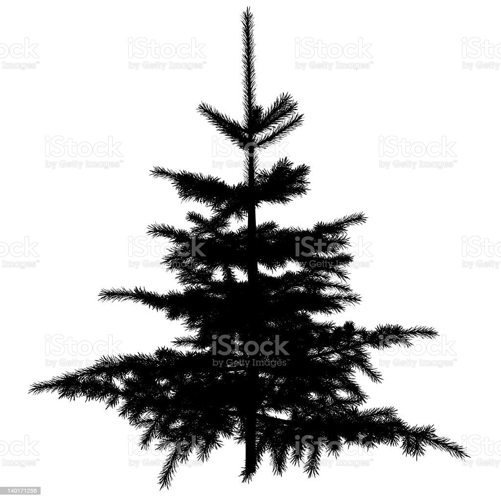 spruce silhouette royalty-free stock vector art