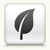 Square Button with Leaf royalty free vector art