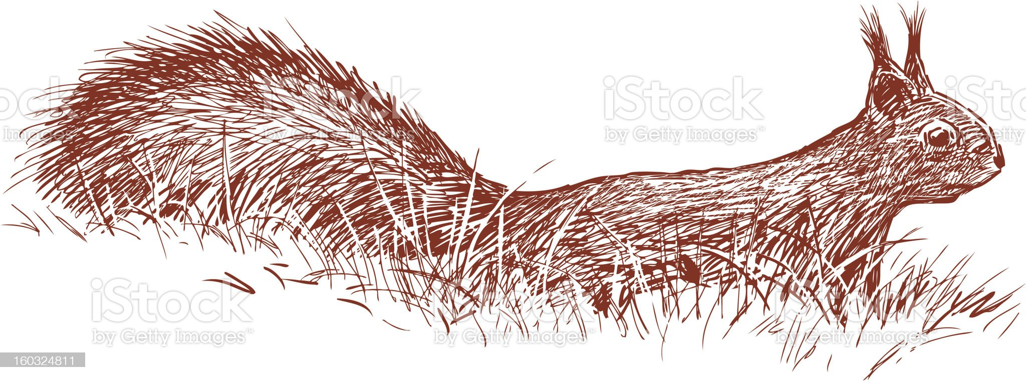 squirrel in the grass royalty-free stock photo