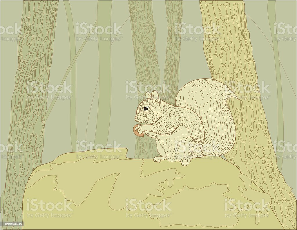 Squirrel on the rock vector art illustration