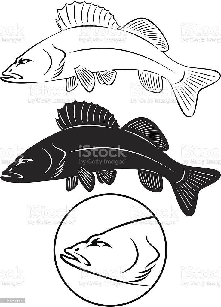 Sriped Bass royalty-free stock vector art