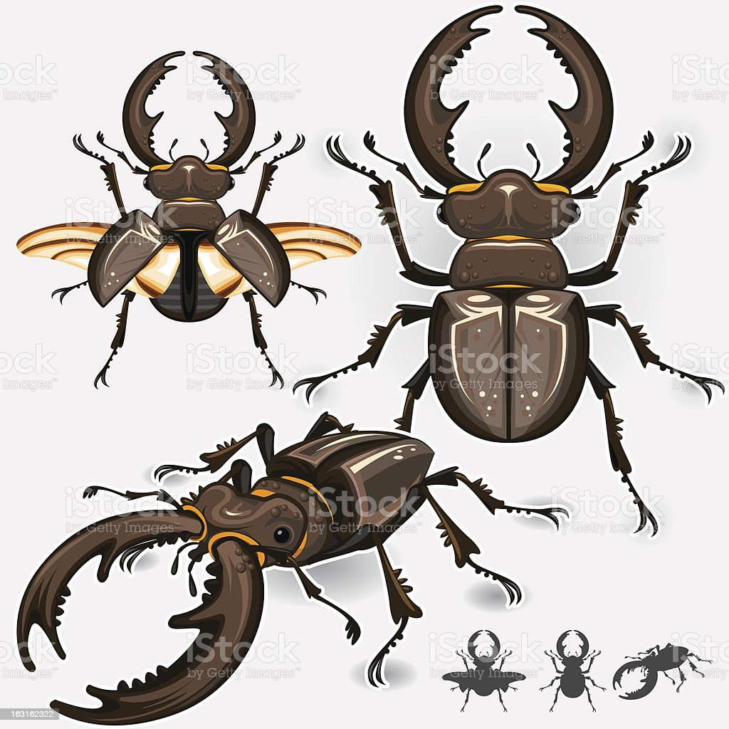 Stag Beetle Insect vector art illustration