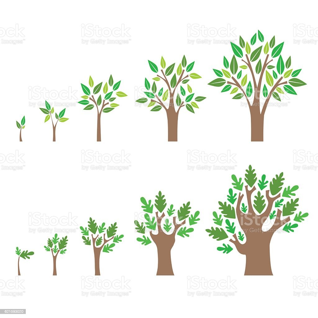 Stage Growth of a Tree Set. Vector vector art illustration