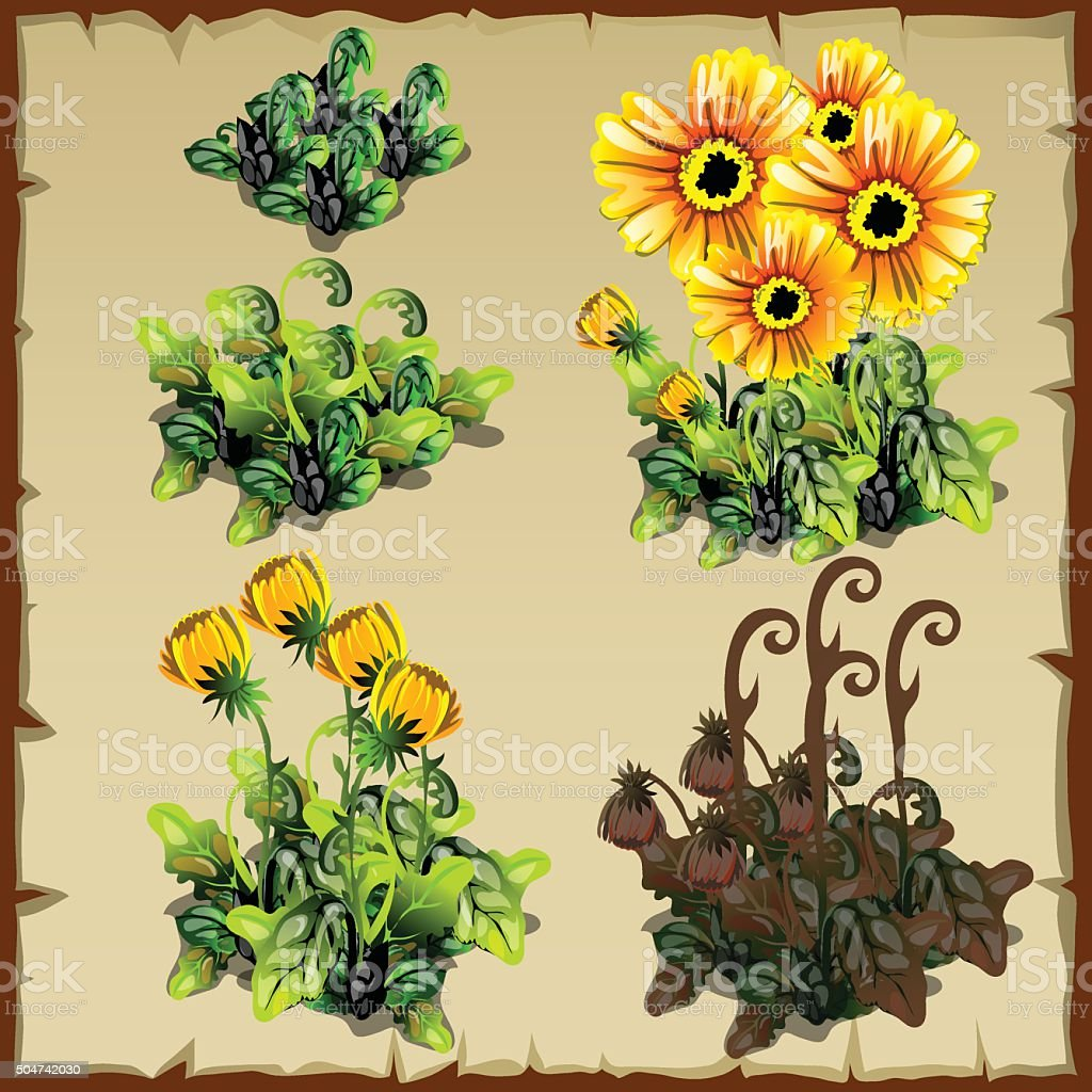 Stages of growth flowers, planting and withering vector art illustration