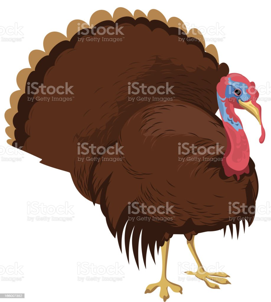 Standing Turkey Thanksgiving royalty-free stock vector art
