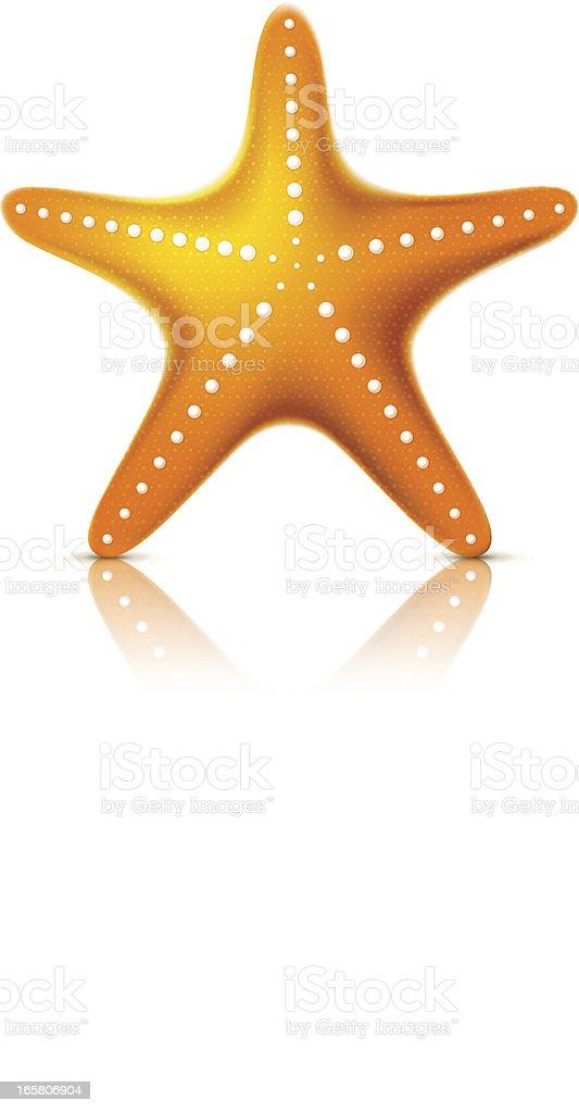 Starfish vector art illustration