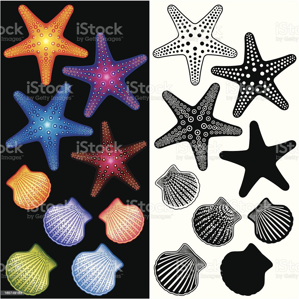 Starfishes and Shells icon set vector art illustration