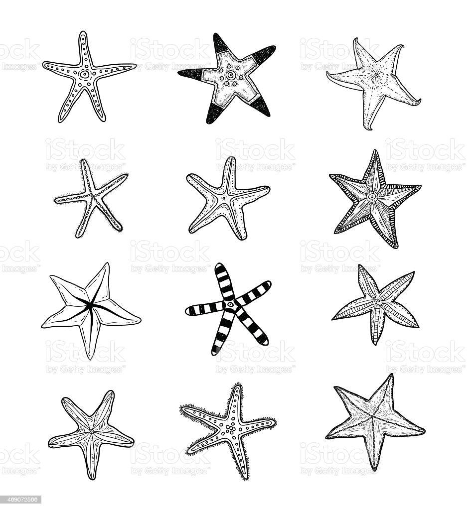 Starfishes set .hand drawn Vector Illustration vector art illustration