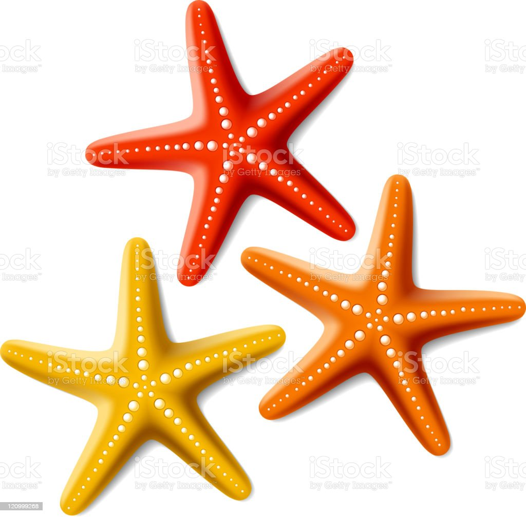 Starfishes vector art illustration