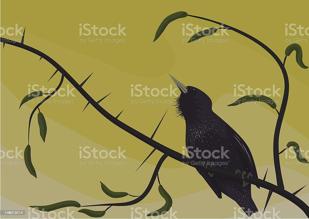 Starling vector art illustration