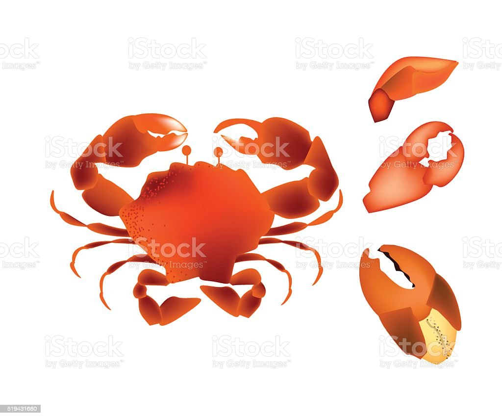 Steamed Crab Isolated on A White Background vector art illustration