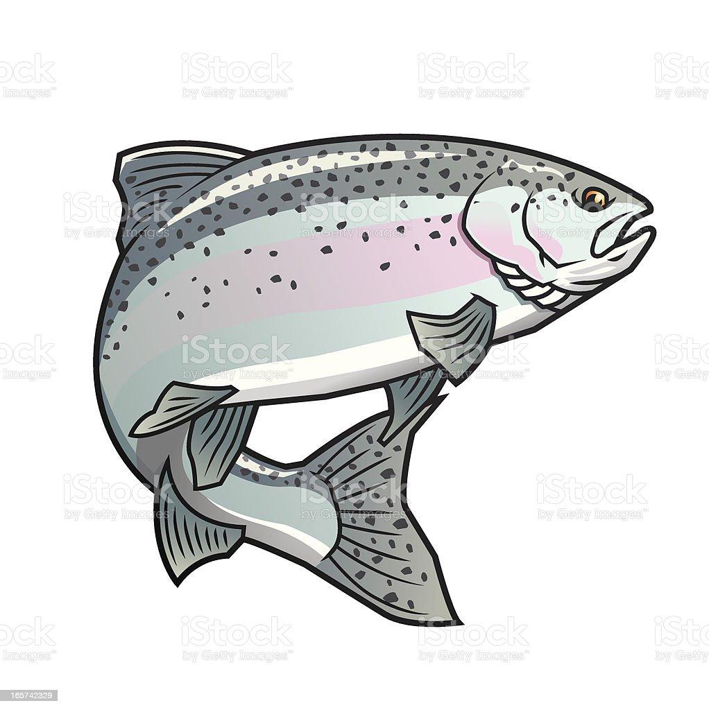 Steelhead Trout vector art illustration