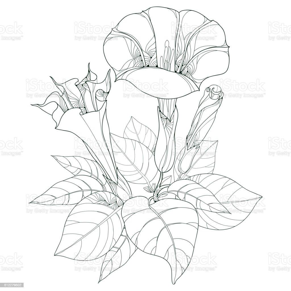 Stem with Datura stramonium or Thorn apple isolated on white. vector art illustration