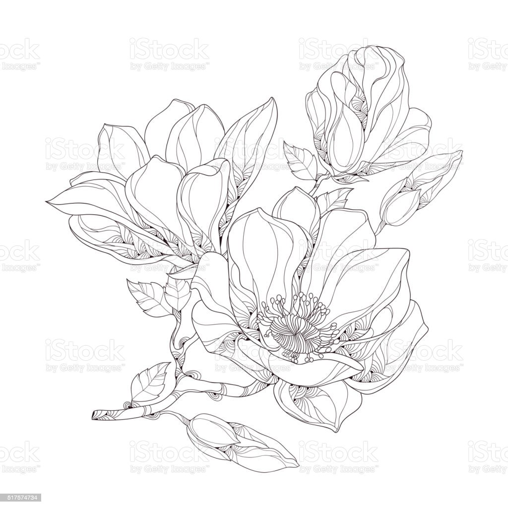 Stem with magnolia flower, buds and leaves isolated on white. vector art illustration
