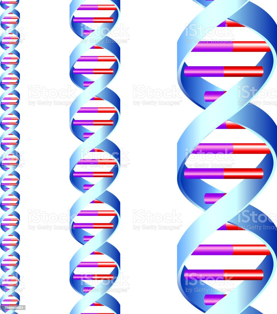 DNA strand royalty-free stock vector art