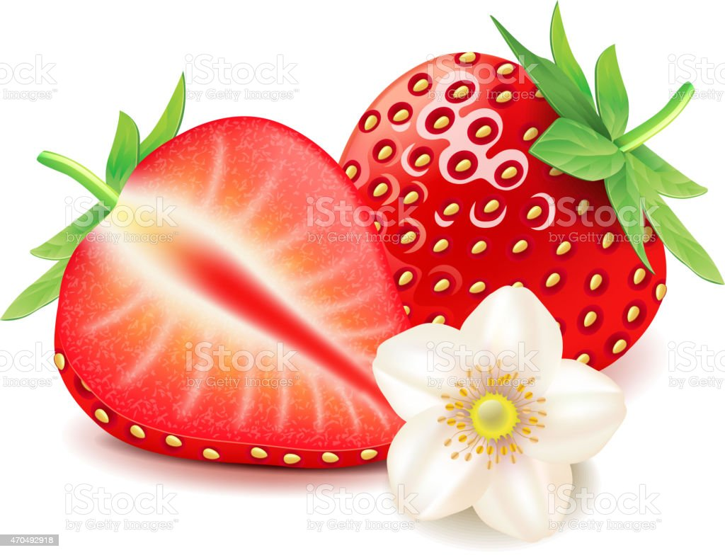 Strawberry and slice isolated on white vector vector art illustration