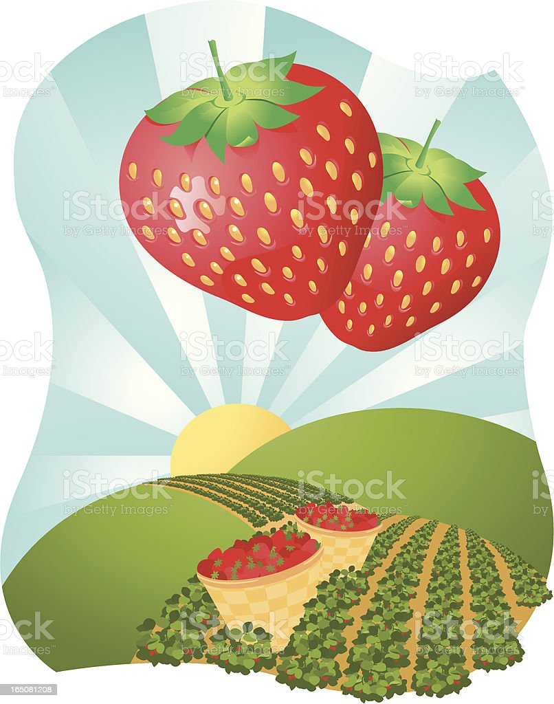 Strawberry fields royalty-free stock vector art