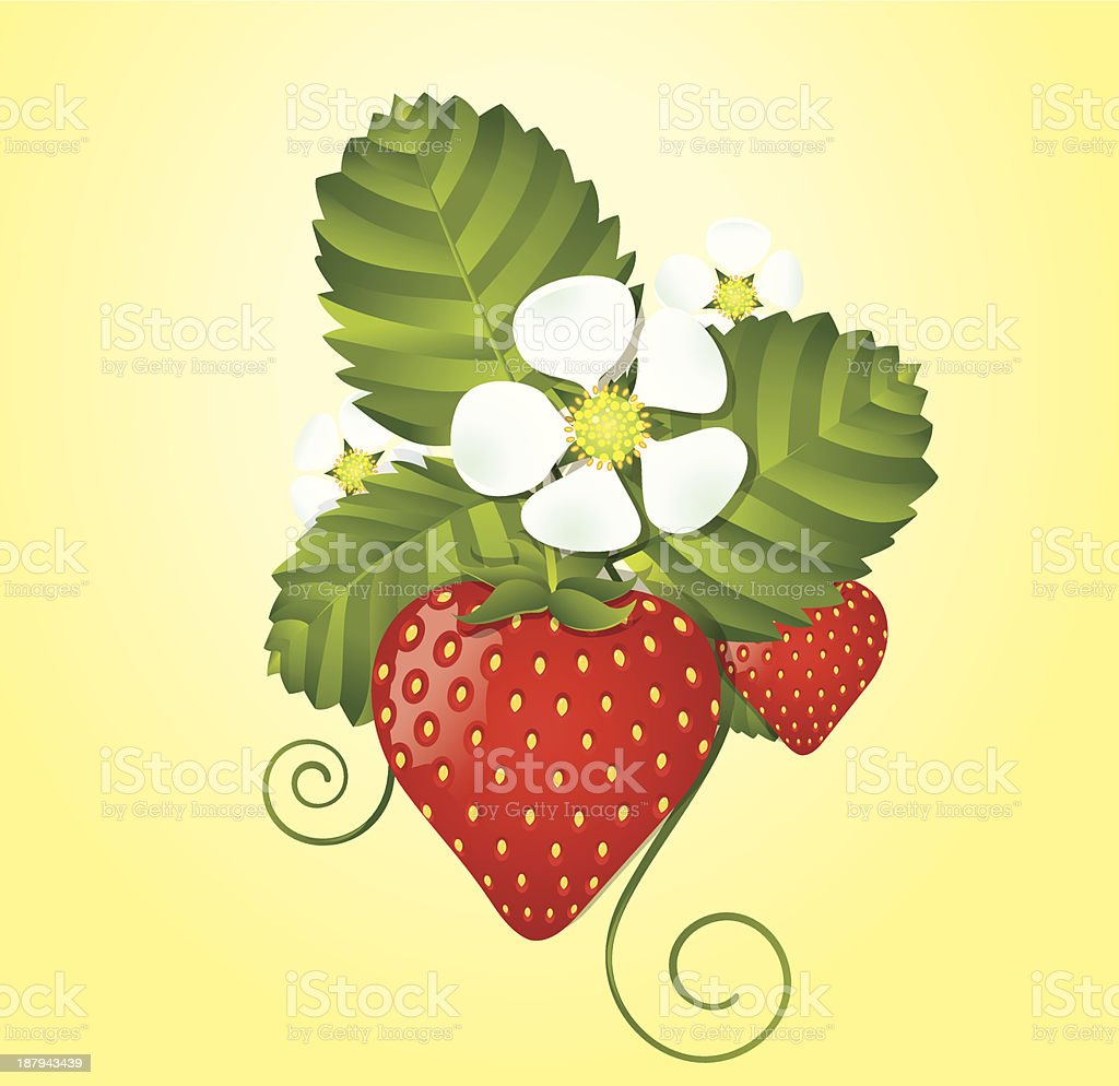 Strawberry floral background royalty-free stock vector art