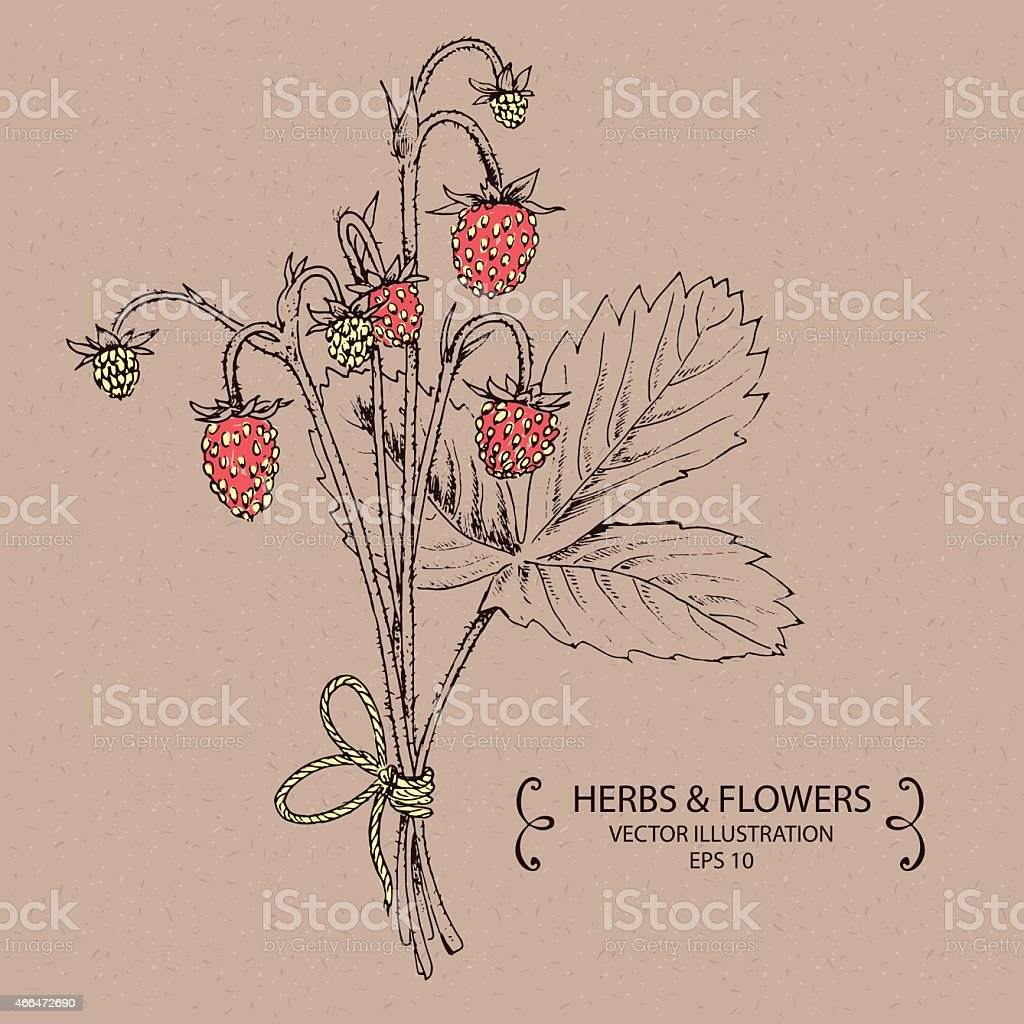 Strawberry Red vector art illustration