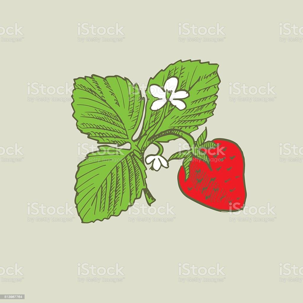 Strawberry sketch vector illustration vector art illustration