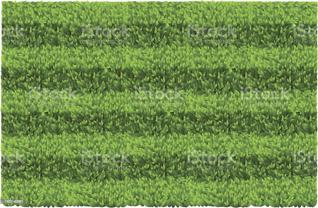 Striped Grass Texture royalty-free stock vector art