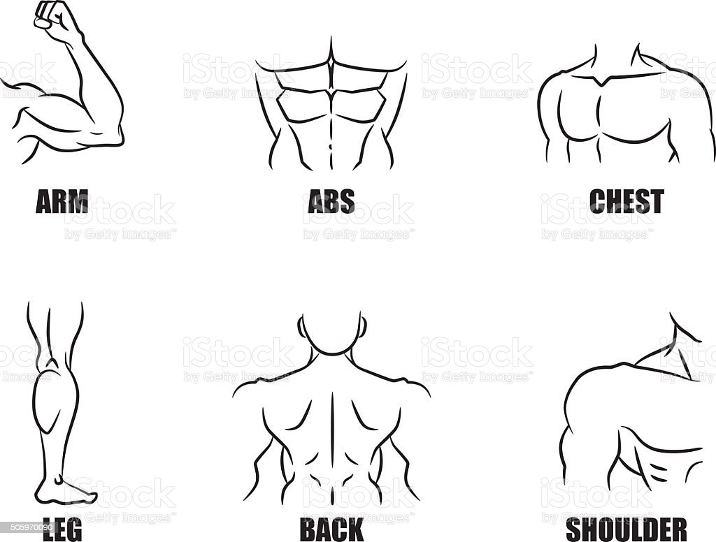 Strong muscles symbol set vector art illustration