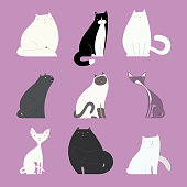 Stylish cat set with different feline bodies