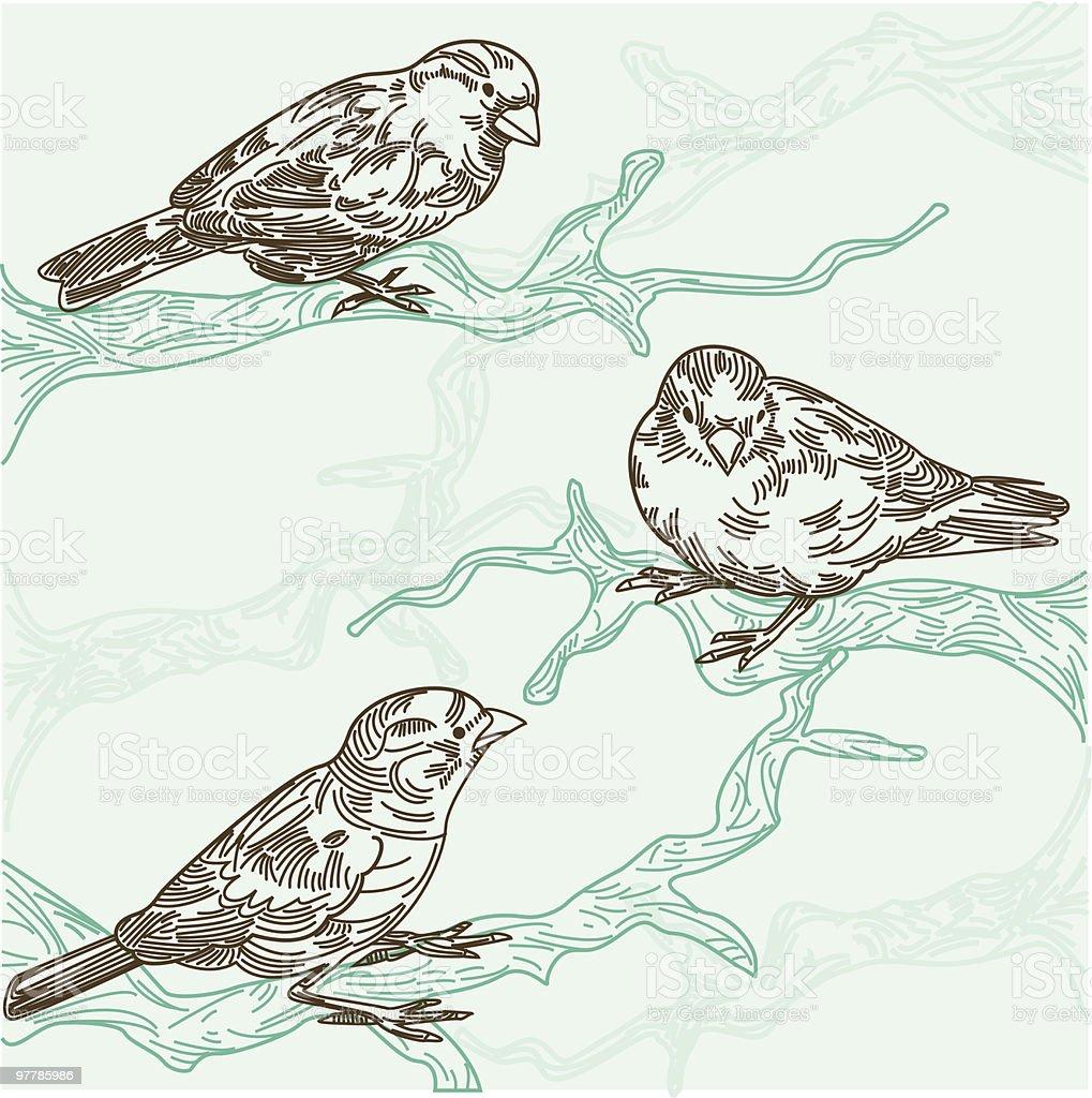 Stylish illustration of three birds on tree branches royalty-free stock vector art