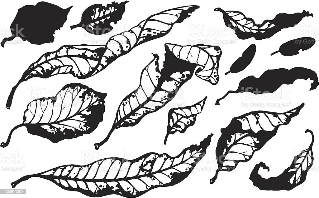 Stylized black and white fall leaves royalty-free stock vector art