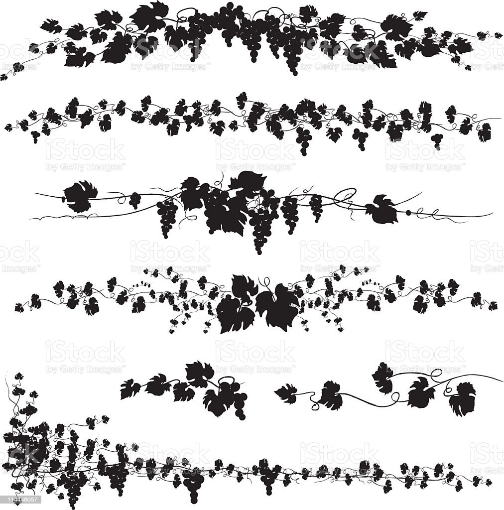 Stylized Black Grapevines page dividers swag silhouettes vector art illustration