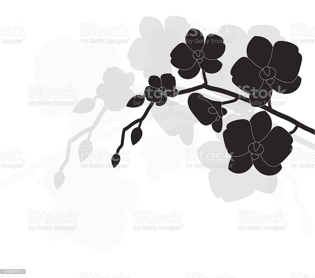 stylized black orchid vector art illustration