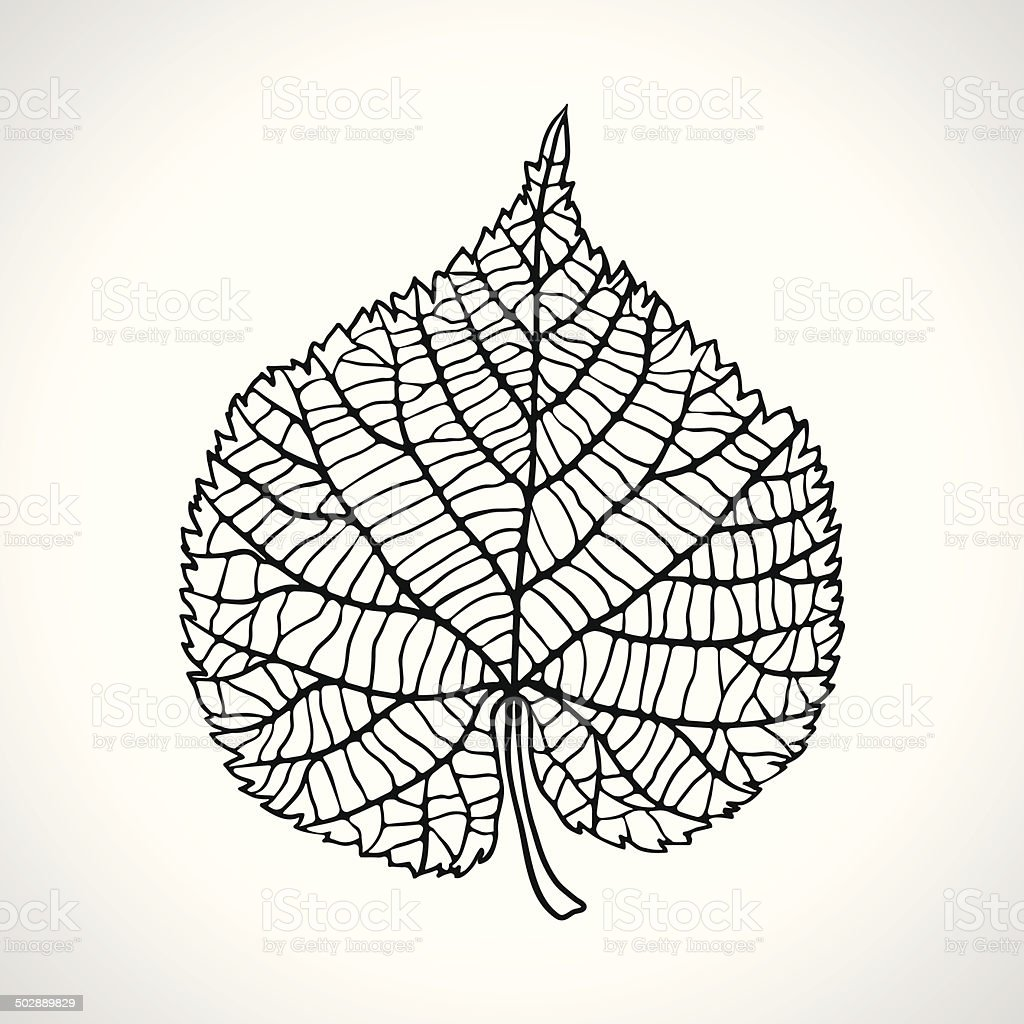 Stylized detail silhouette of leaf isolated on background. vector art illustration