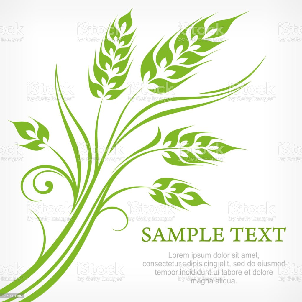 Stylized ears of wheat in green vector art illustration