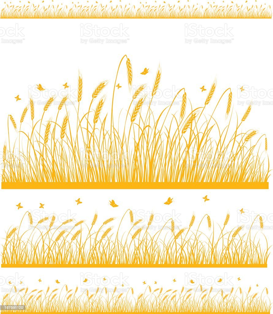 Stylized fields of wheat on white background  vector art illustration