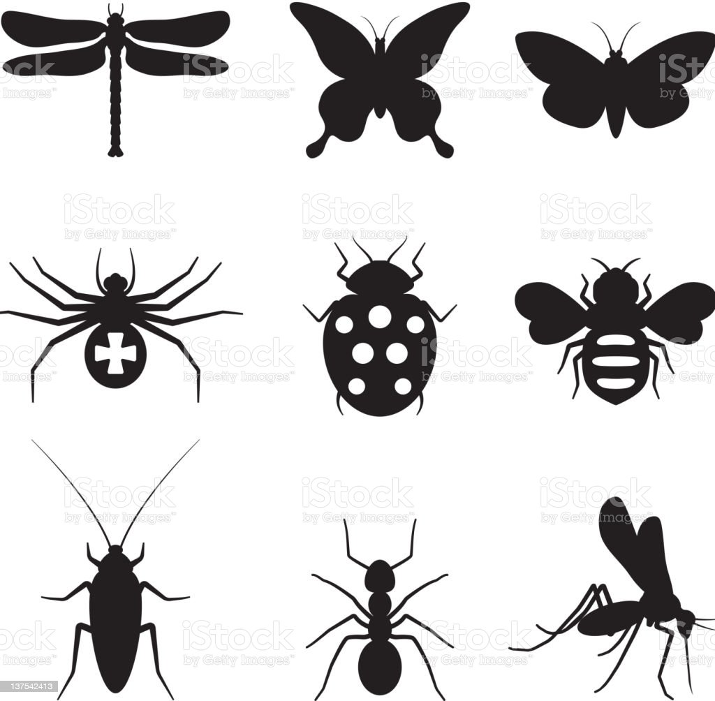 Stylized insects black and white royalty free vector icon set vector art illustration