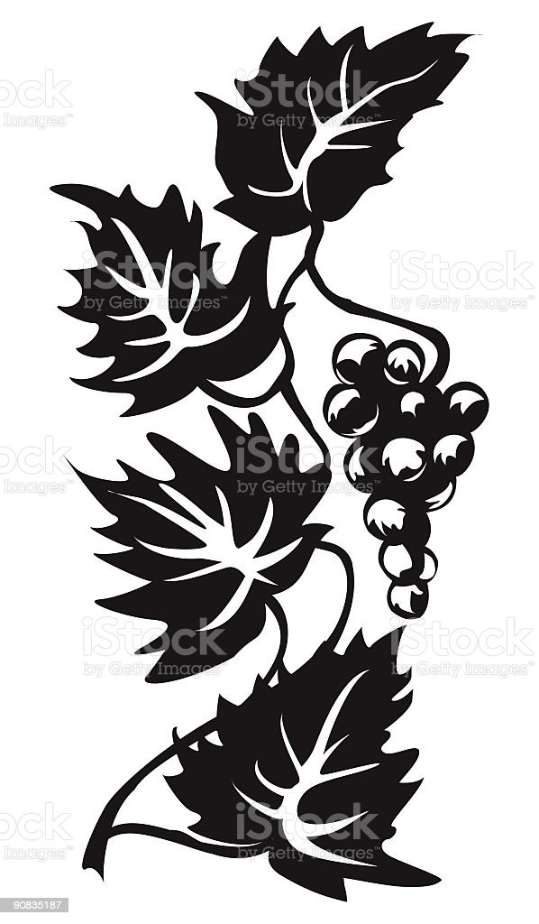 Stylized Sketchy Ornamental Grapevine and Grape Bunch Silhouette royalty-free stock vector art