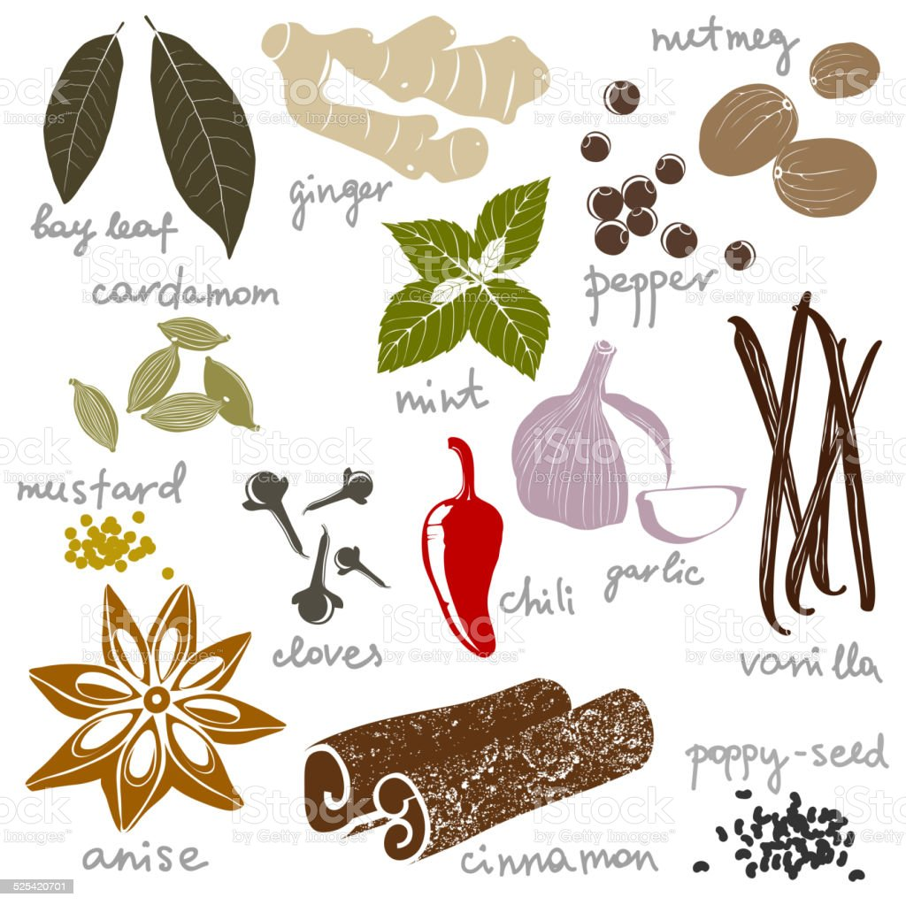 stylized spices vector art illustration