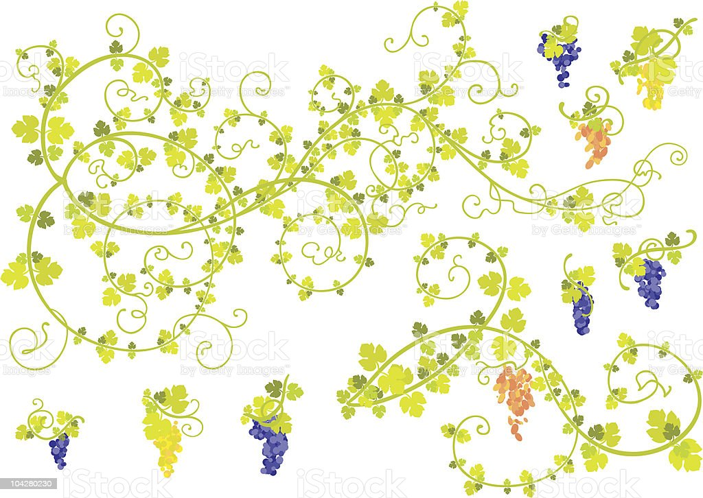 Stylized vine and clusters of grapes. vector art illustration