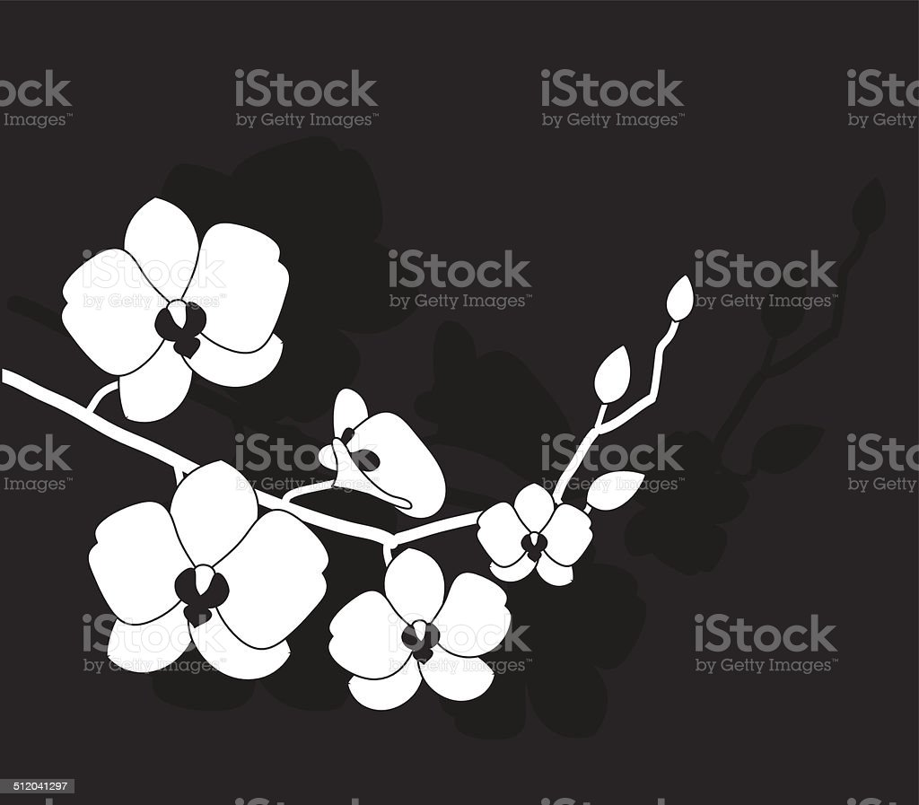 stylized white orchid vector art illustration