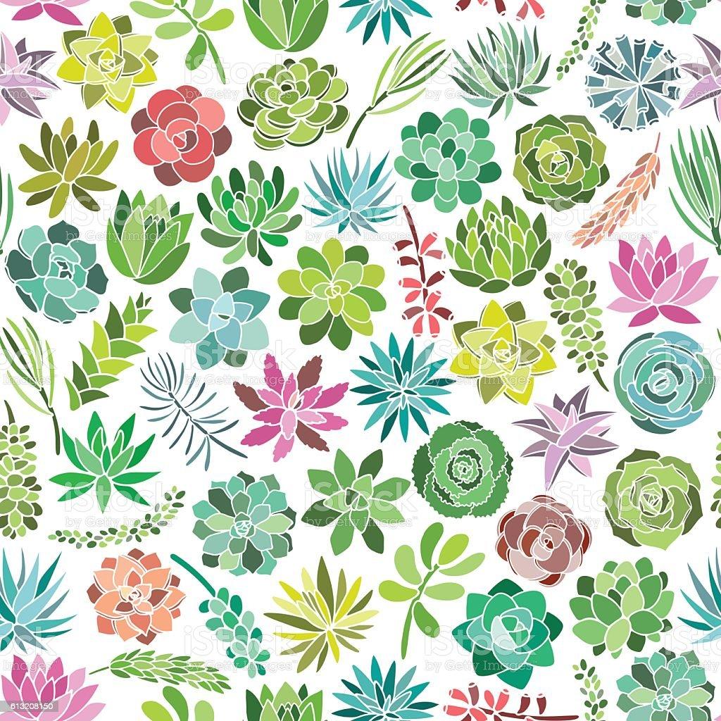Succulent plant seamless pattern on white background. Vector illustration vector art illustration
