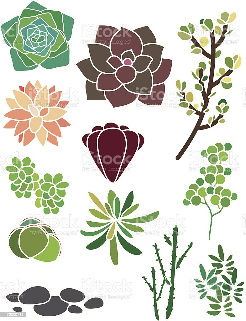 Succulent Spring Garden vector art illustration