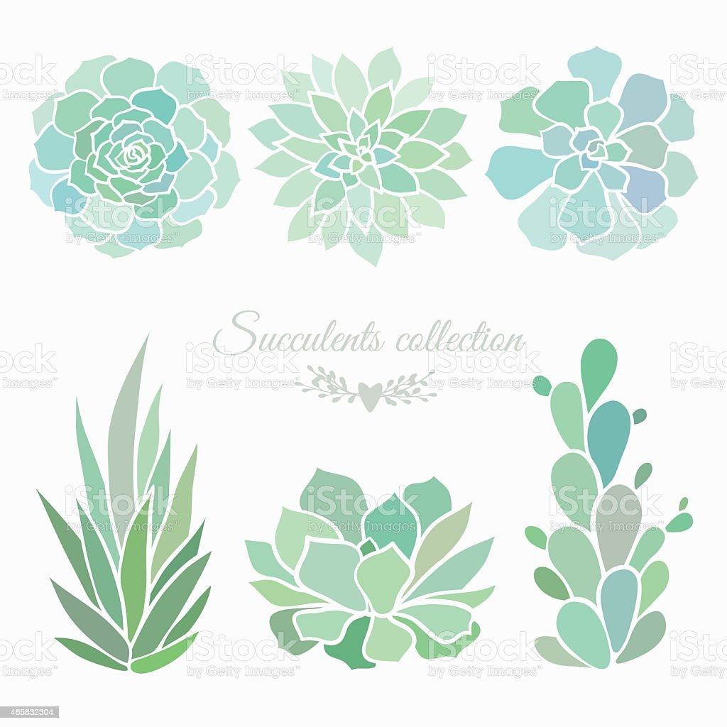 succulents collection vector art illustration