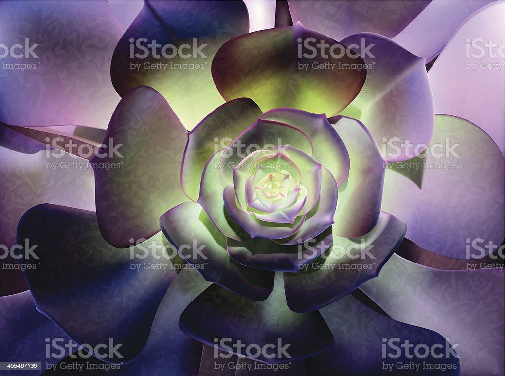 Succulent-Vector Illustration vector art illustration