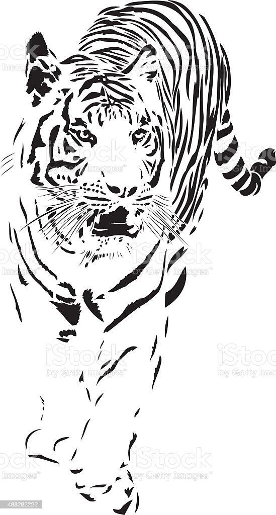 Sumatra Tiger vector vector art illustration